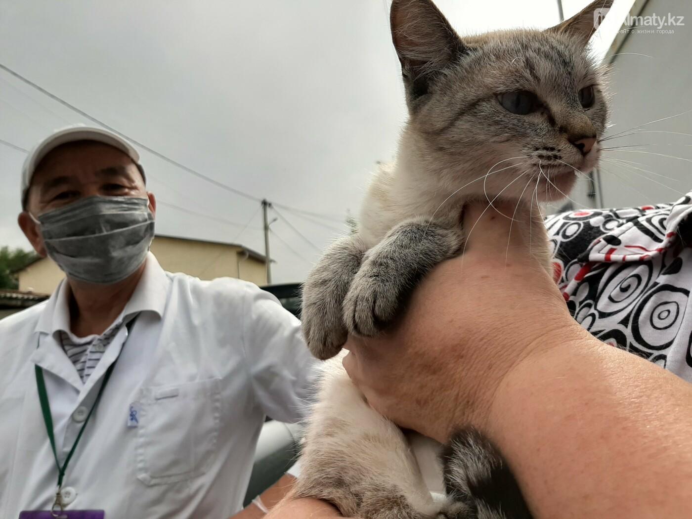 Как проходит бесплатное чипирование собак и кошек в Алматы. Фото/видео, фото-8
