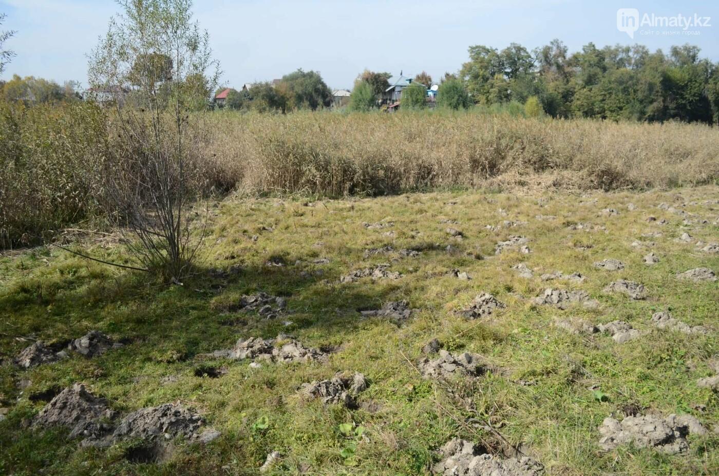 Как выглядит новый парк в зоне Аэропортовского озера и микрорайона Жас Канат в Алматы, фото-10