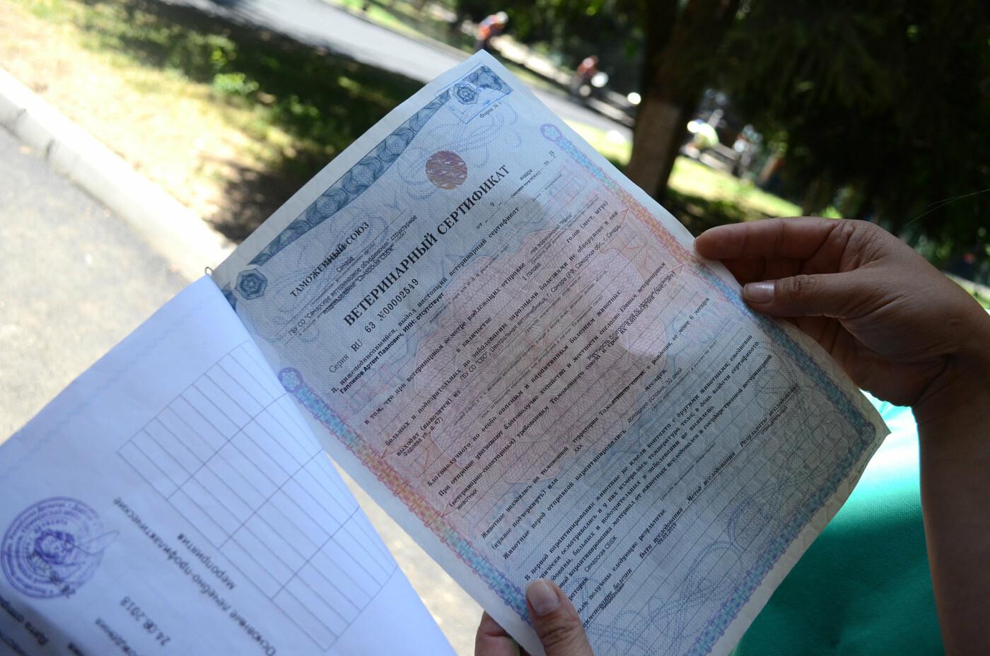 Сертификат о ввозе львенка без отметок о необходимых прививках