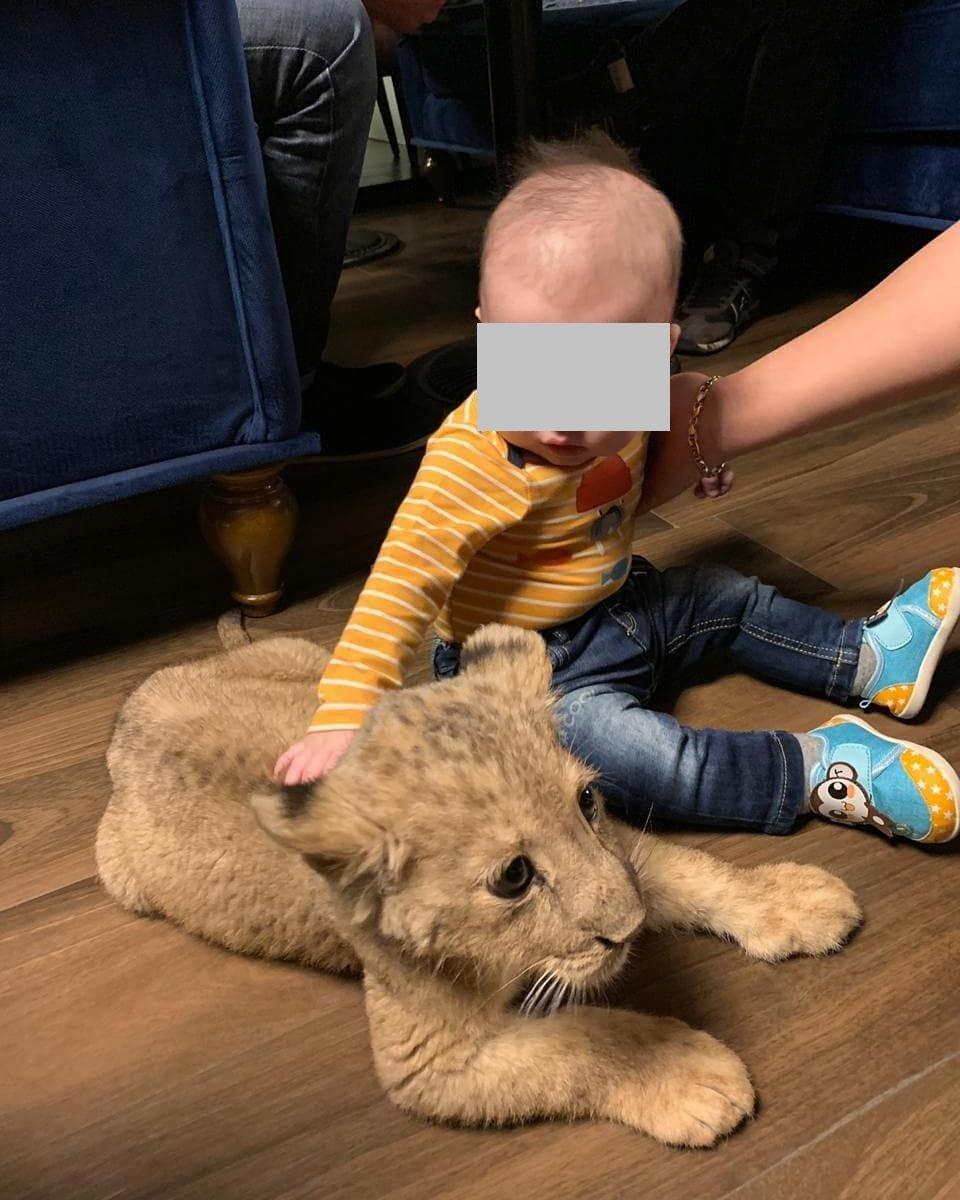 В сети обнаружились снимки погибшей львицы Ассоль с посетителями ресторана (видео), фото-2