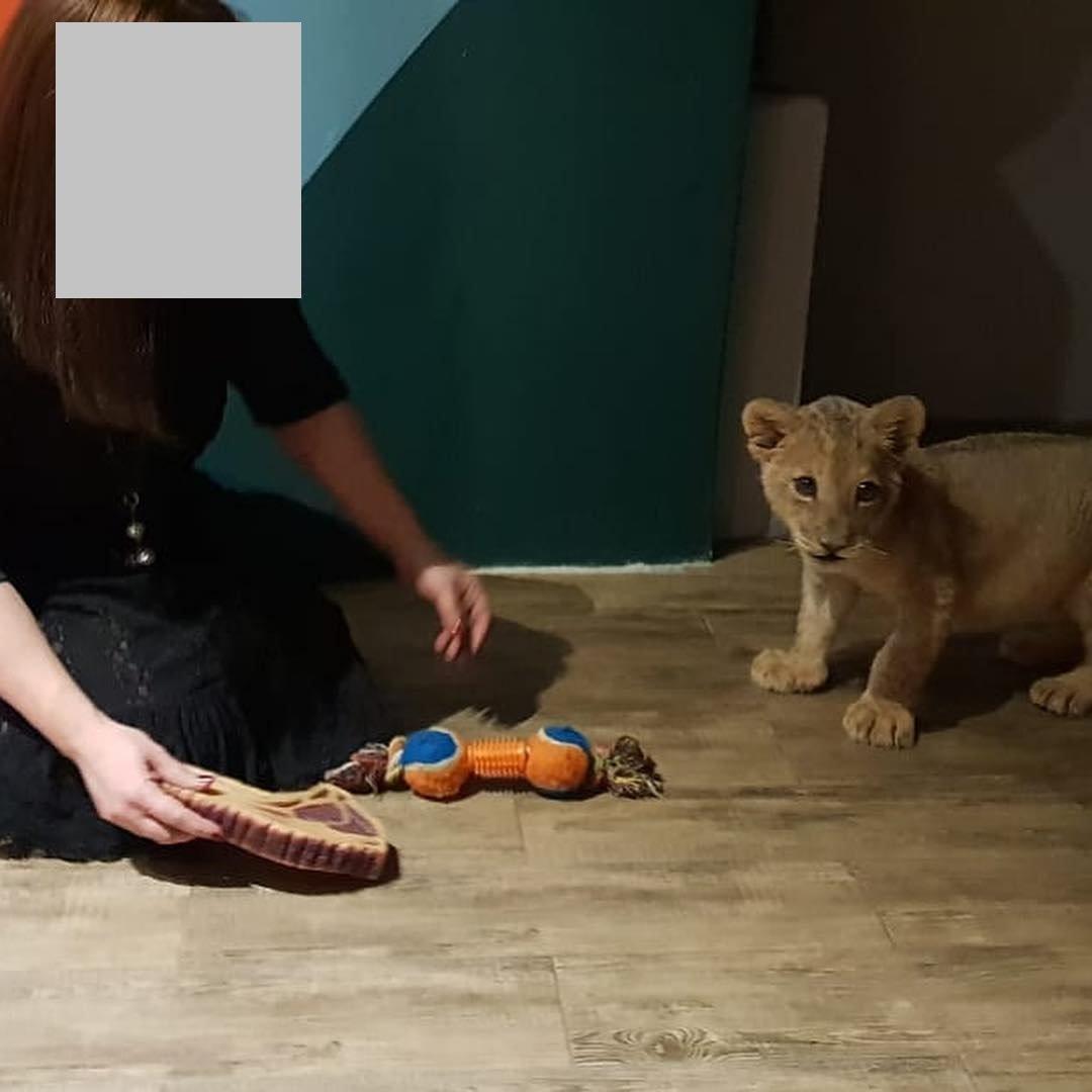 В сети обнаружились снимки погибшей львицы Ассоль с посетителями ресторана (видео), фото-8