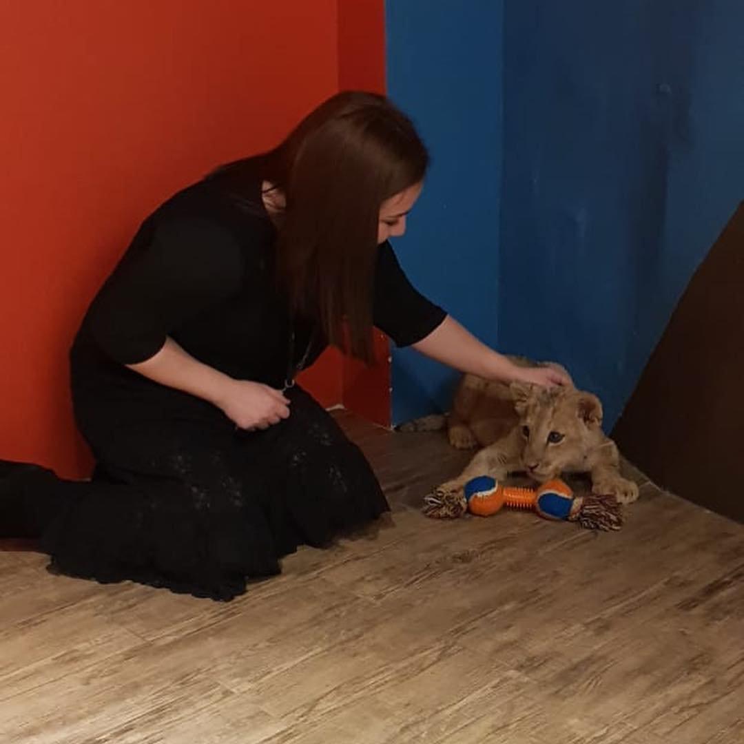 В сети обнаружились снимки погибшей львицы Ассоль с посетителями ресторана (видео), фото-1