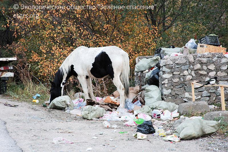 """Как спасти алматинские ущелья от мусора и застройки рассказали экологи, фото-4, ОФ """"Зеленое спасение"""""""