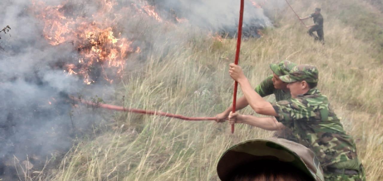 Крупный степной пожар тушат в Алматинской области, погибло три человека, фото-1