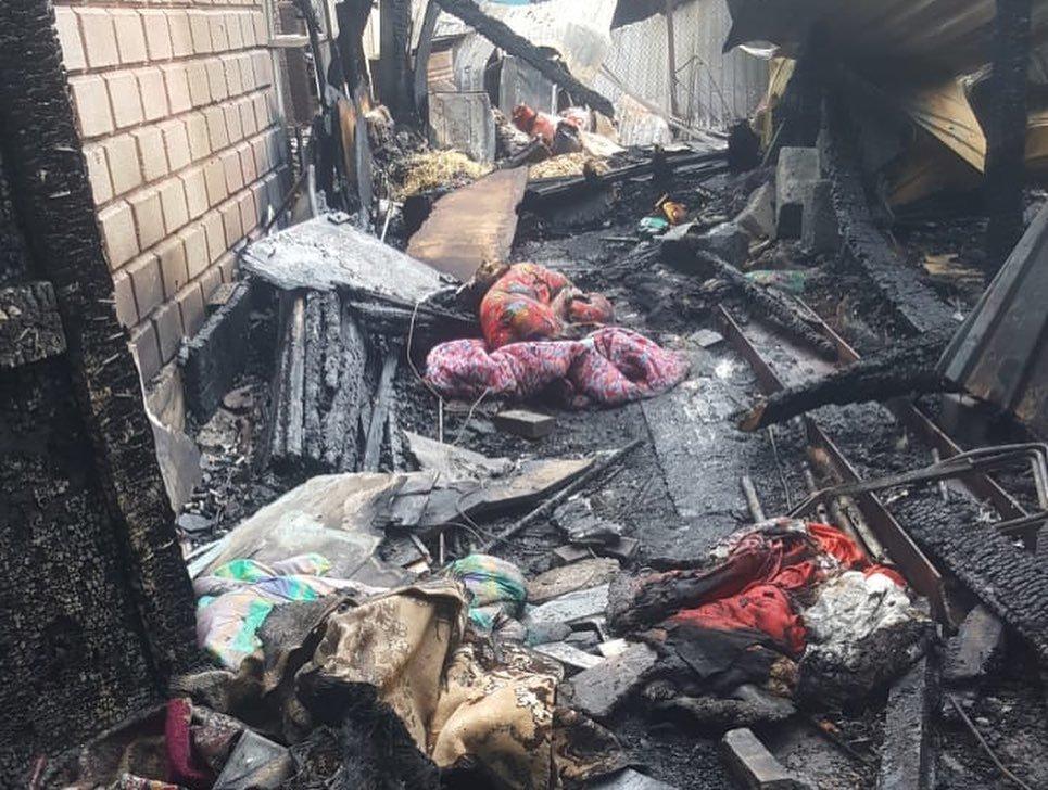 """""""Умерли обнявшись"""": Собаки, сгоревшие при пожаре в Алматы, были спасены из рук живодеров, фото-1"""