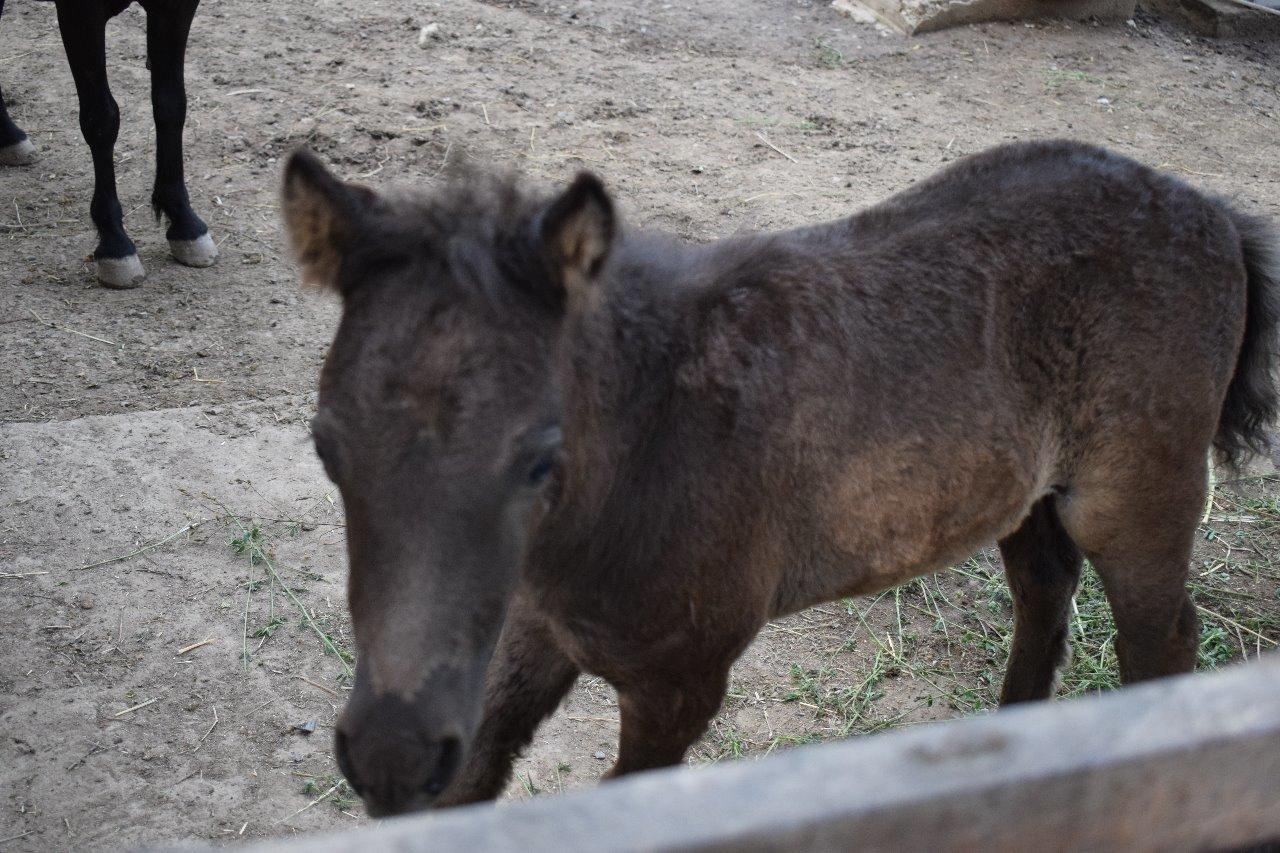 Карликовая коза родилась в зоопарке Алматы (фото), фото-4