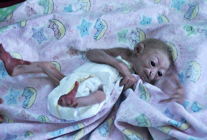 В Алматинском зоопарке родился детеныш исчезающего гиббона (фото), фото-2, Фото пресс-службы Алматинского зоопарка
