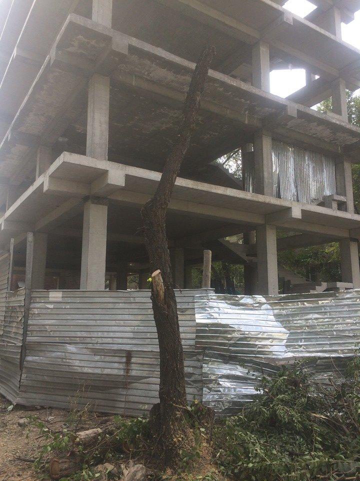 «Разрешение не требуется»: в Алматы по улице Сатпаева топировали деревья, фото-1
