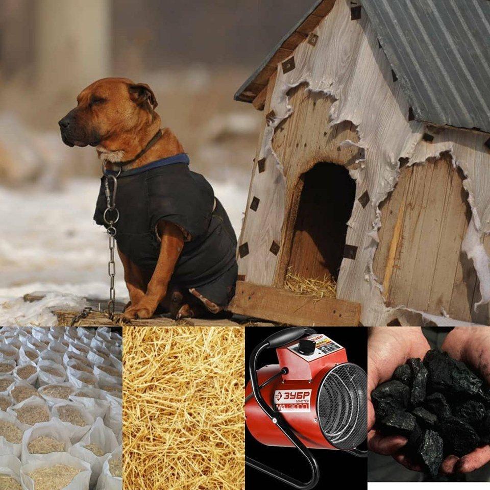 Зоозащитница, у которой сгорел склад в Алматы, просит «одеть» собак к зиме, фото-1
