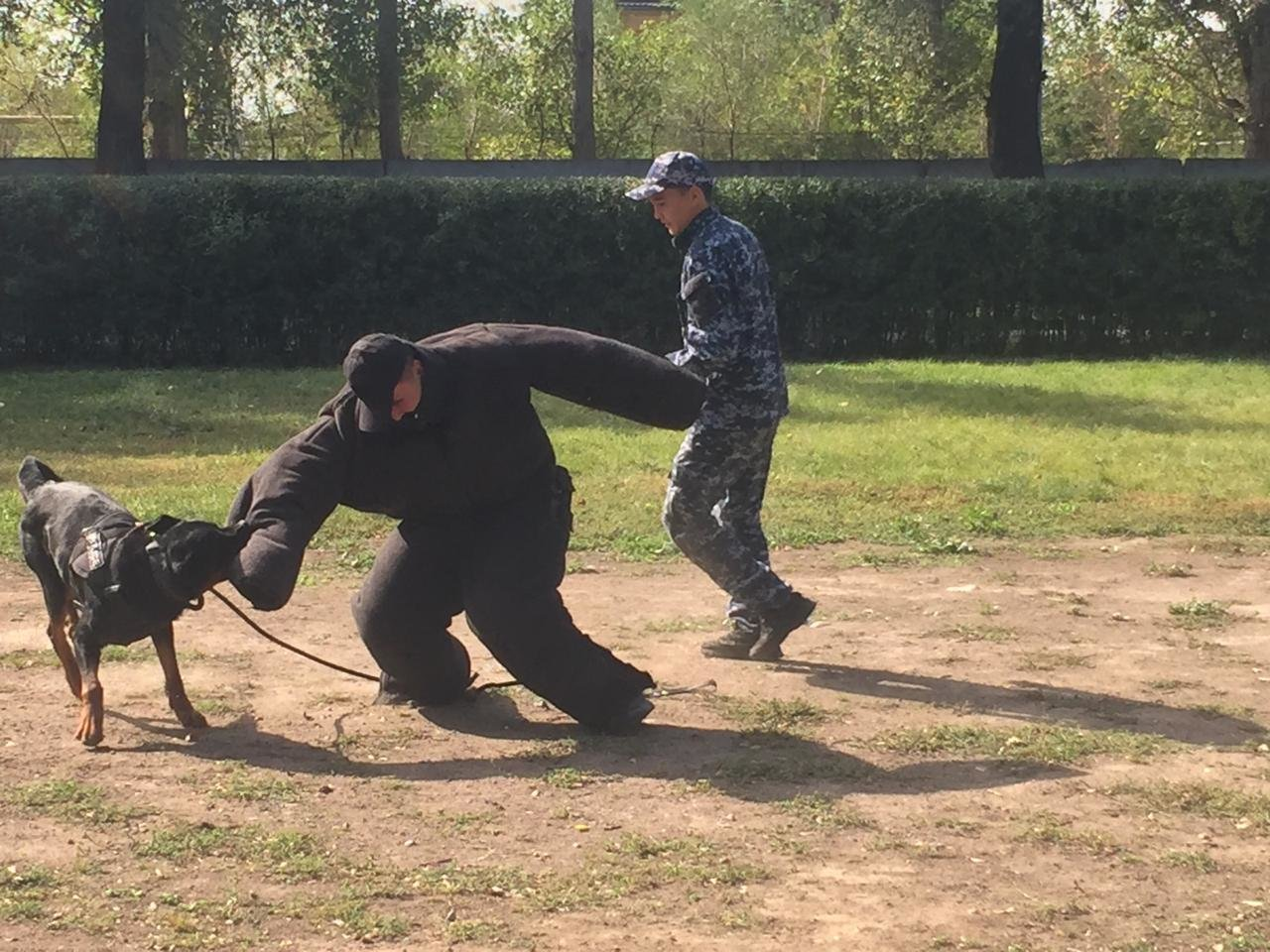 Студентам-юристам показали четвероногих стражей порядка Алматы (фото), фото-9