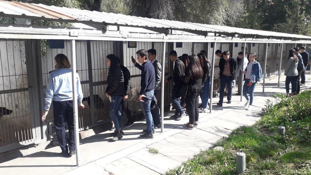 Студентам-юристам показали четвероногих стражей порядка Алматы (фото), фото-6