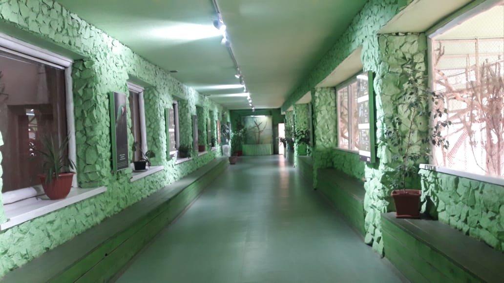 Какие обитатели Алматинского зоопарка переехали в зимние жилища?, фото-1