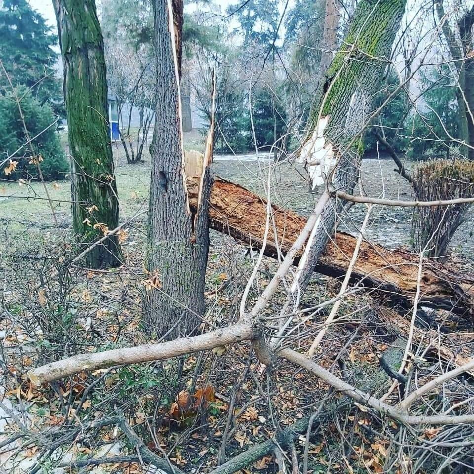 Одно из 19 аварийных деревьев упало в парке 28-ми панфиловцев в Алматы, фото-1, Фото: Татьяна Антоненко/Facebook