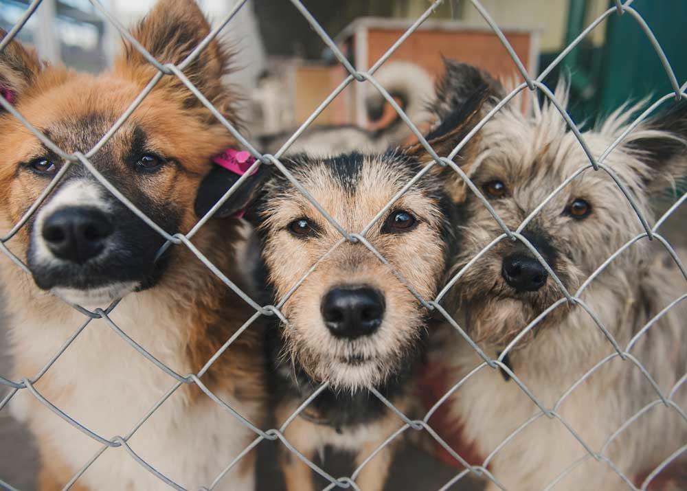 Чипирование и штрафы: чем отличается содержание французских собак от казахстанских? , фото-3