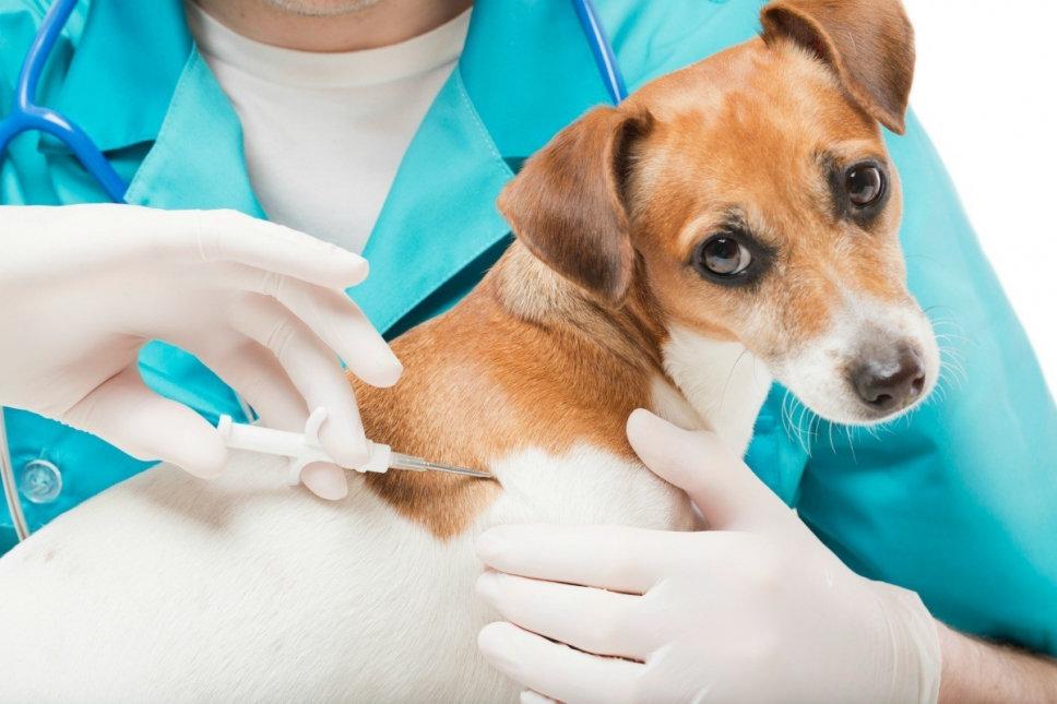 Чипирование и штрафы: чем отличается содержание французских собак от казахстанских? , фото-1