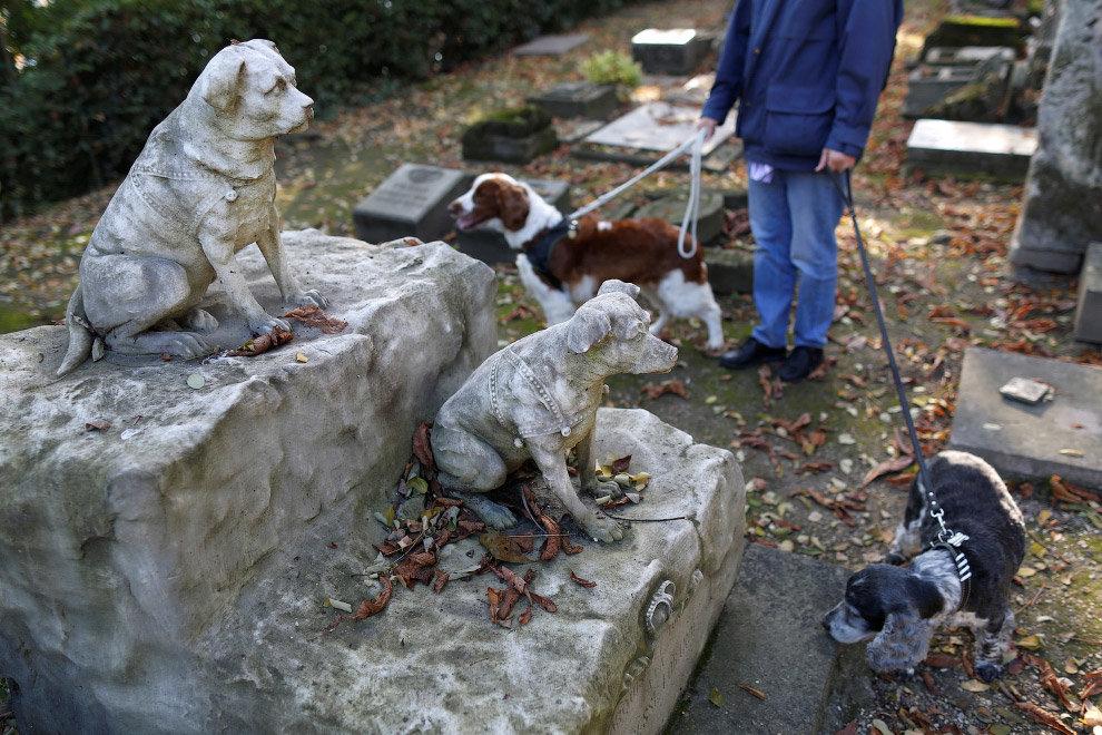 Чипирование и штрафы: чем отличается содержание французских собак от казахстанских? , фото-4