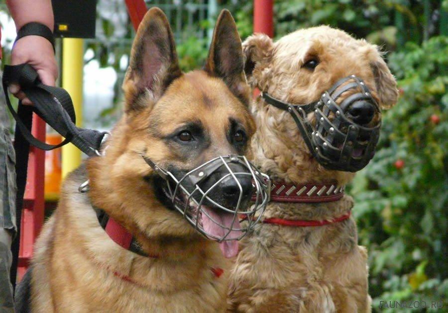 Чипирование и штрафы: чем отличается содержание французских собак от казахстанских? , фото-2