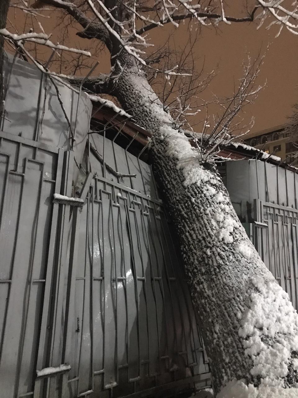 Огромное дерево рухнуло на алматинскую больницу, в палате образовалась трещина (фото), фото-1