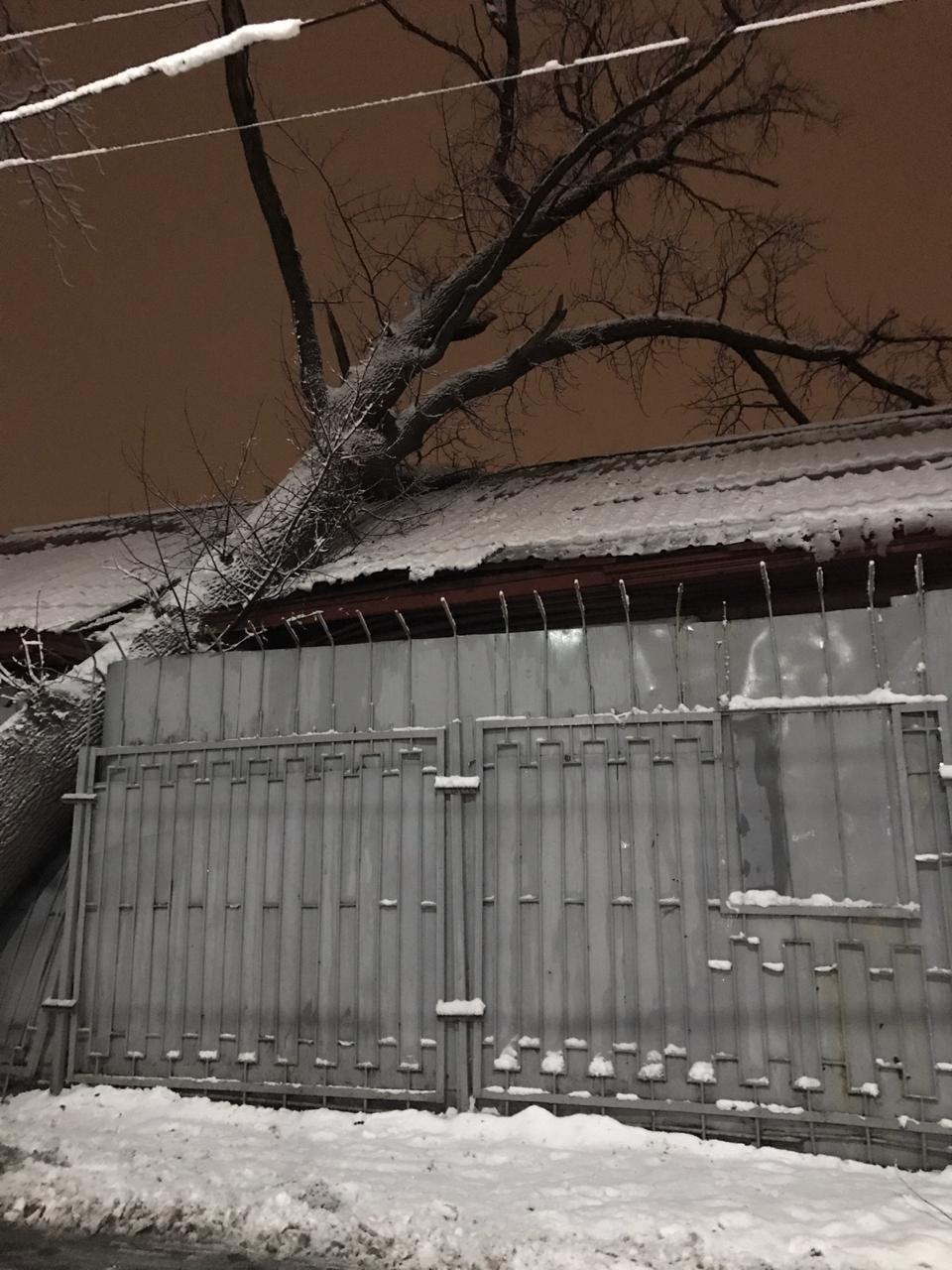 Огромное дерево рухнуло на алматинскую больницу, в палате образовалась трещина (фото), фото-2