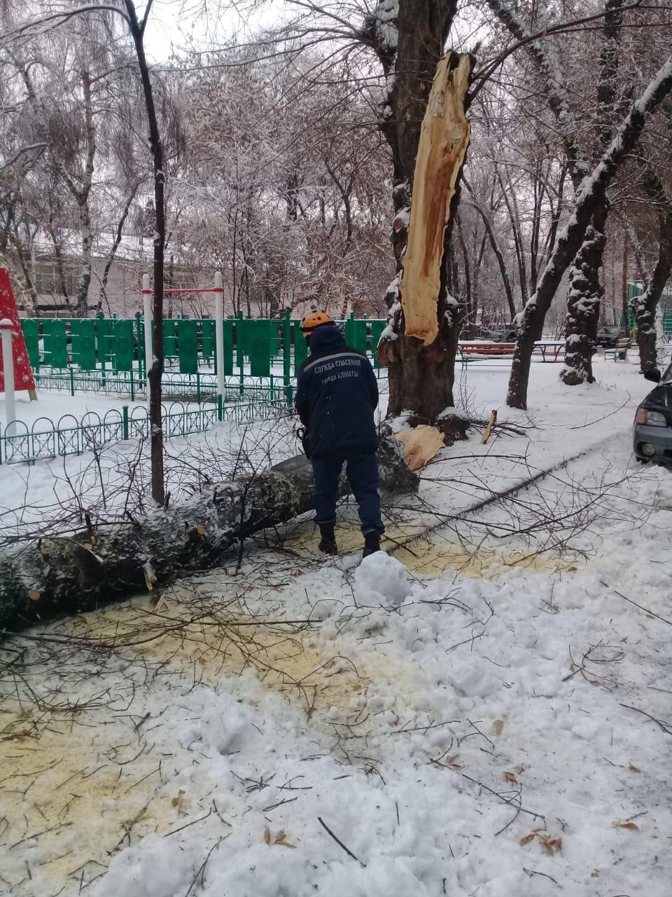 В Алматы из-за снега упало восемь аварийных деревеьв (фото), фото-1