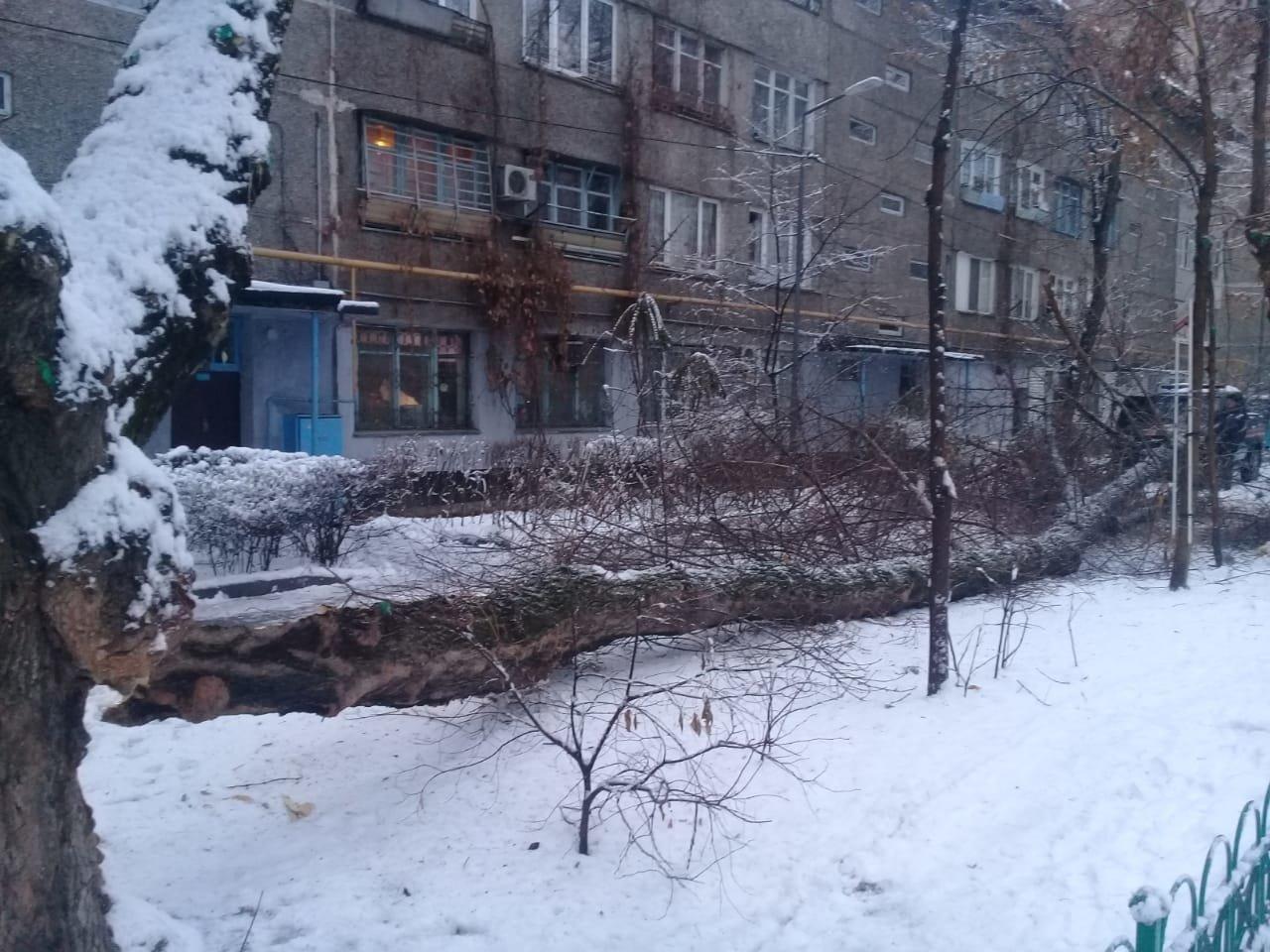 В Алматы из-за снега упало восемь аварийных деревеьв (фото), фото-2