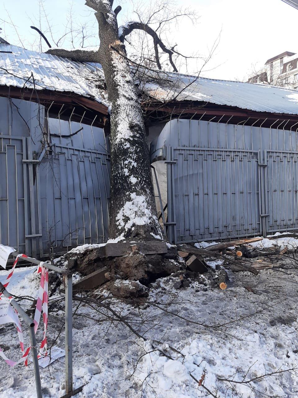 В Алматы из-за снега упало восемь аварийных деревеьв (фото), фото-3
