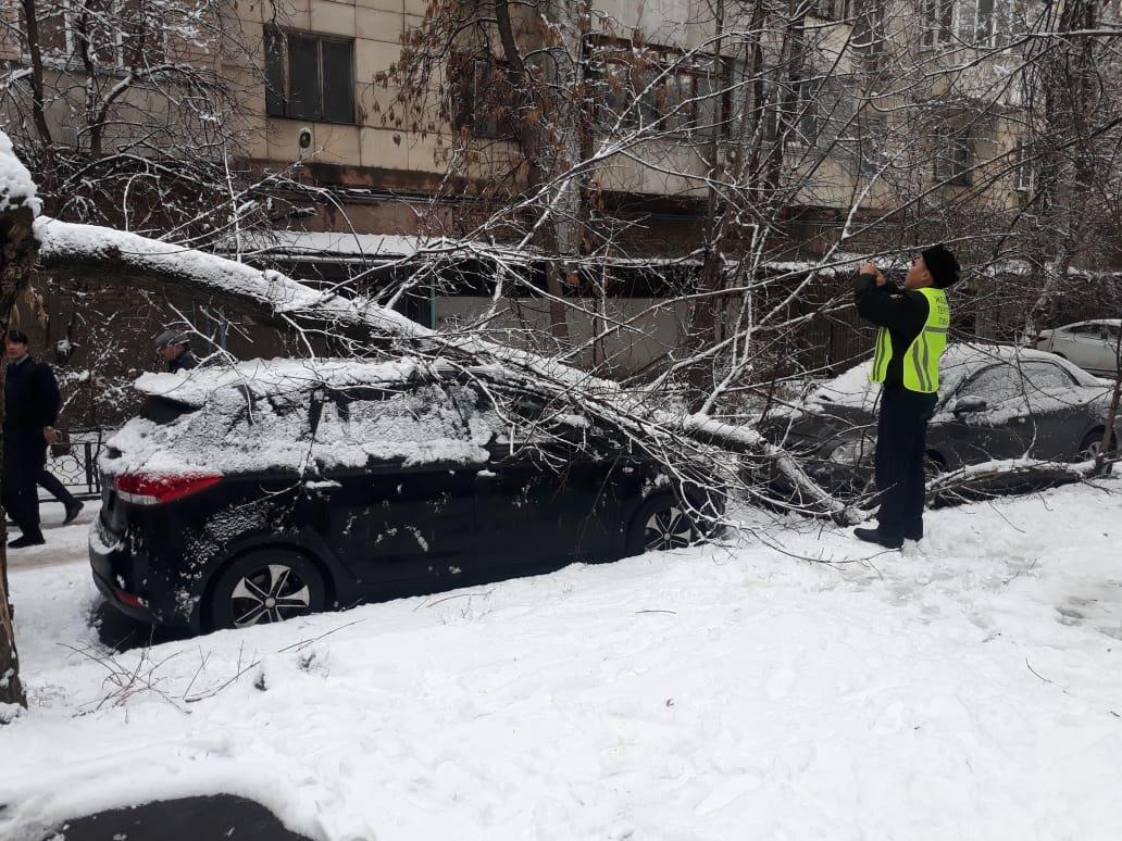 В Алматы из-за снега упало восемь аварийных деревеьв (фото), фото-4