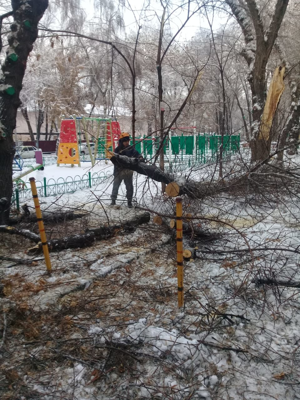 В Алматы из-за снега упало восемь аварийных деревеьв (фото), фото-5