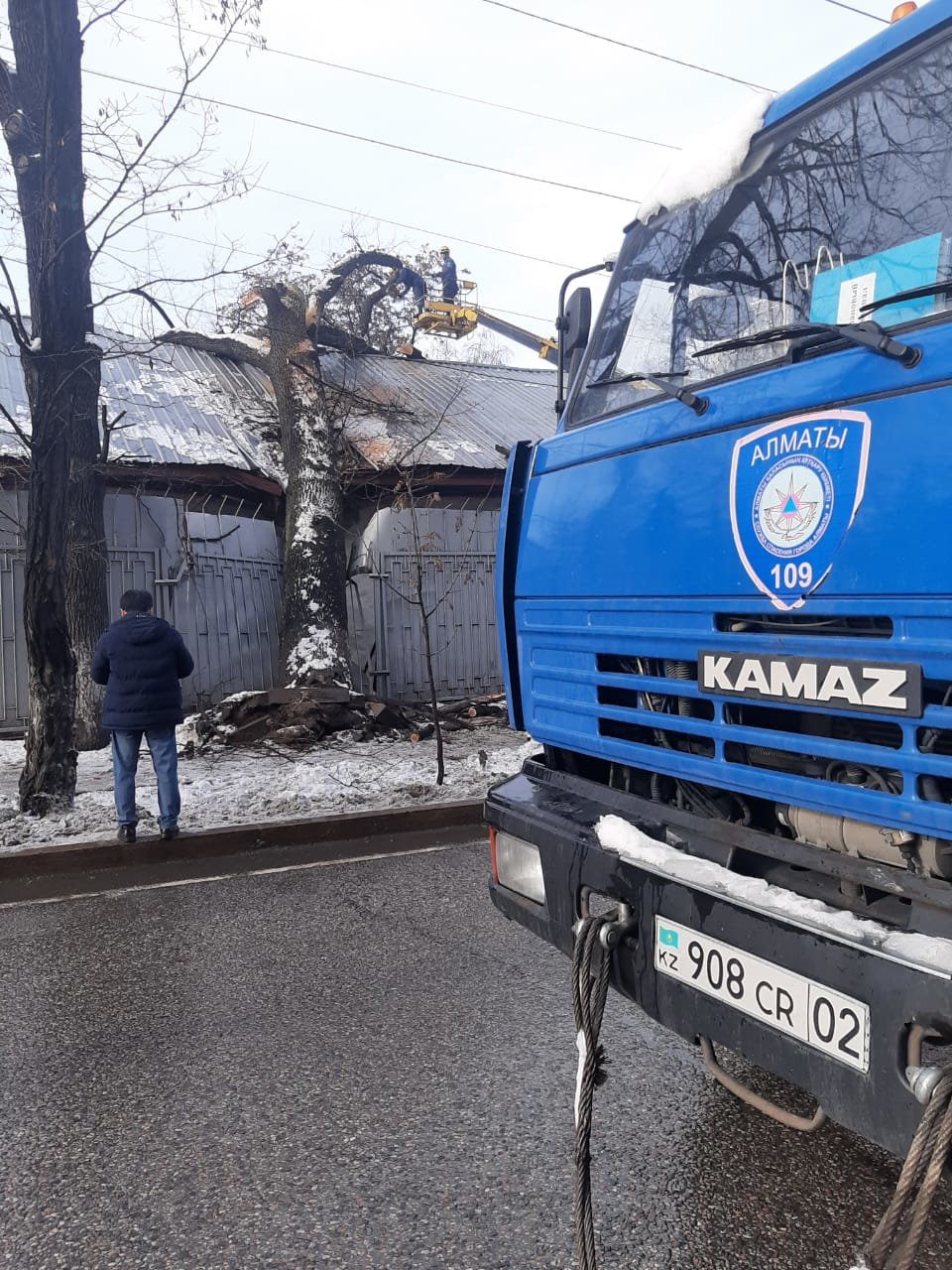 В Алматы из-за снега упало восемь аварийных деревеьв (фото), фото-6