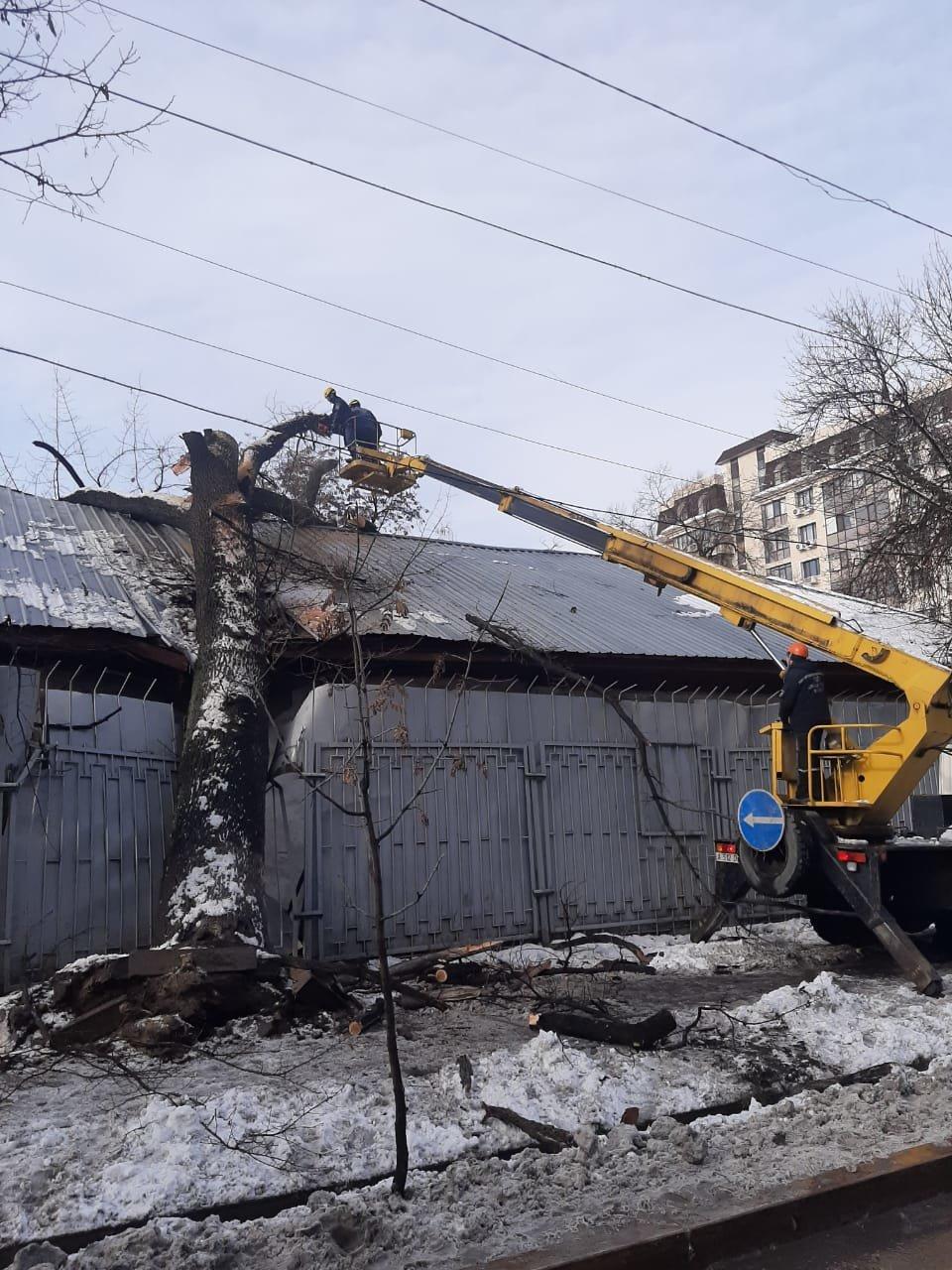 В Алматы из-за снега упало восемь аварийных деревеьв (фото), фото-7