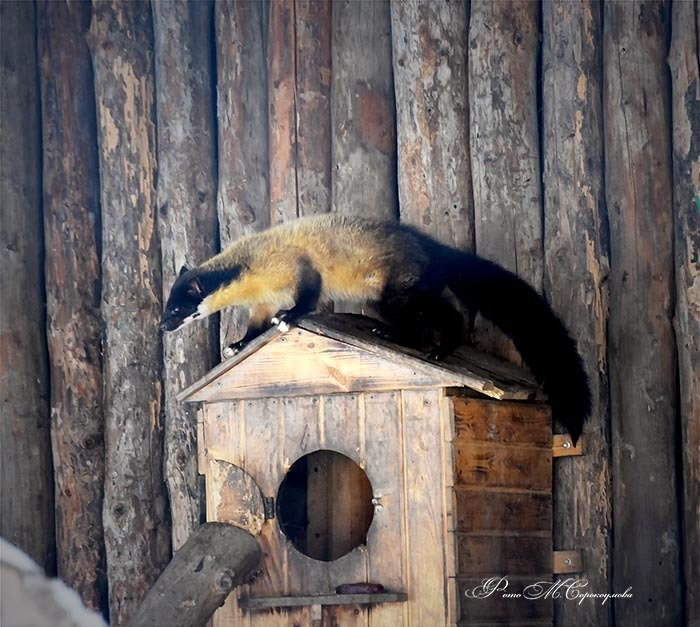 Фото Алматинского зоопарка