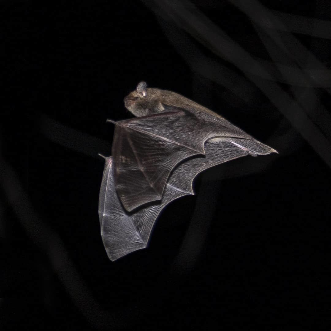 Алматинский фотограф в самоизоляции снимал летучих мышей, фото-3