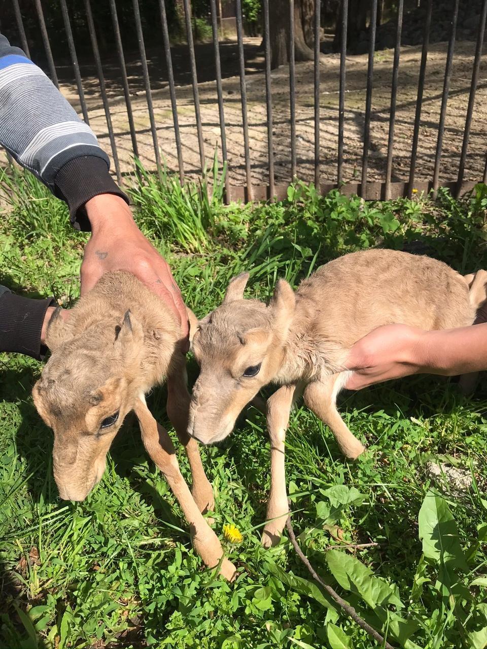 Алматинский зоопарк откроется 6-го июня с соблюдением санитарных норм, фото-1