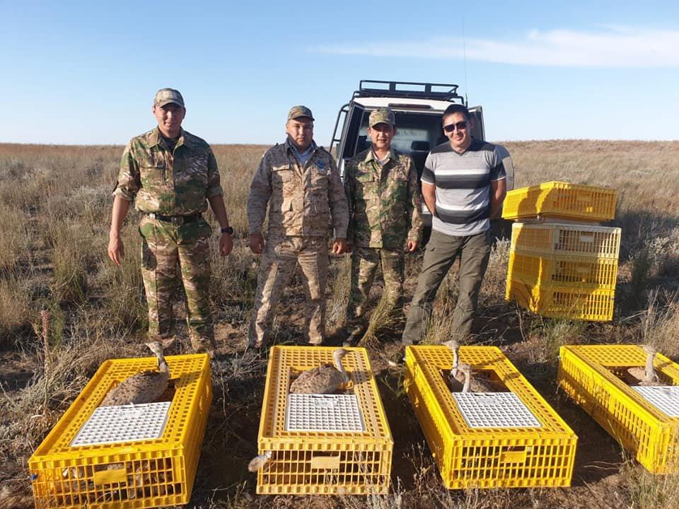 Краснокнижных дроф-красоток выпустили в дикую природу в Алматинской области, фото-2