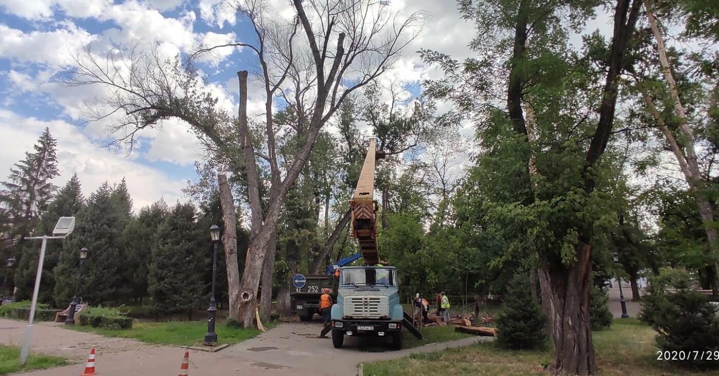 Взамен 20 вырубленных аварийных деревьев в сквере в центре Алматы высадят 100 саженцев, фото-3
