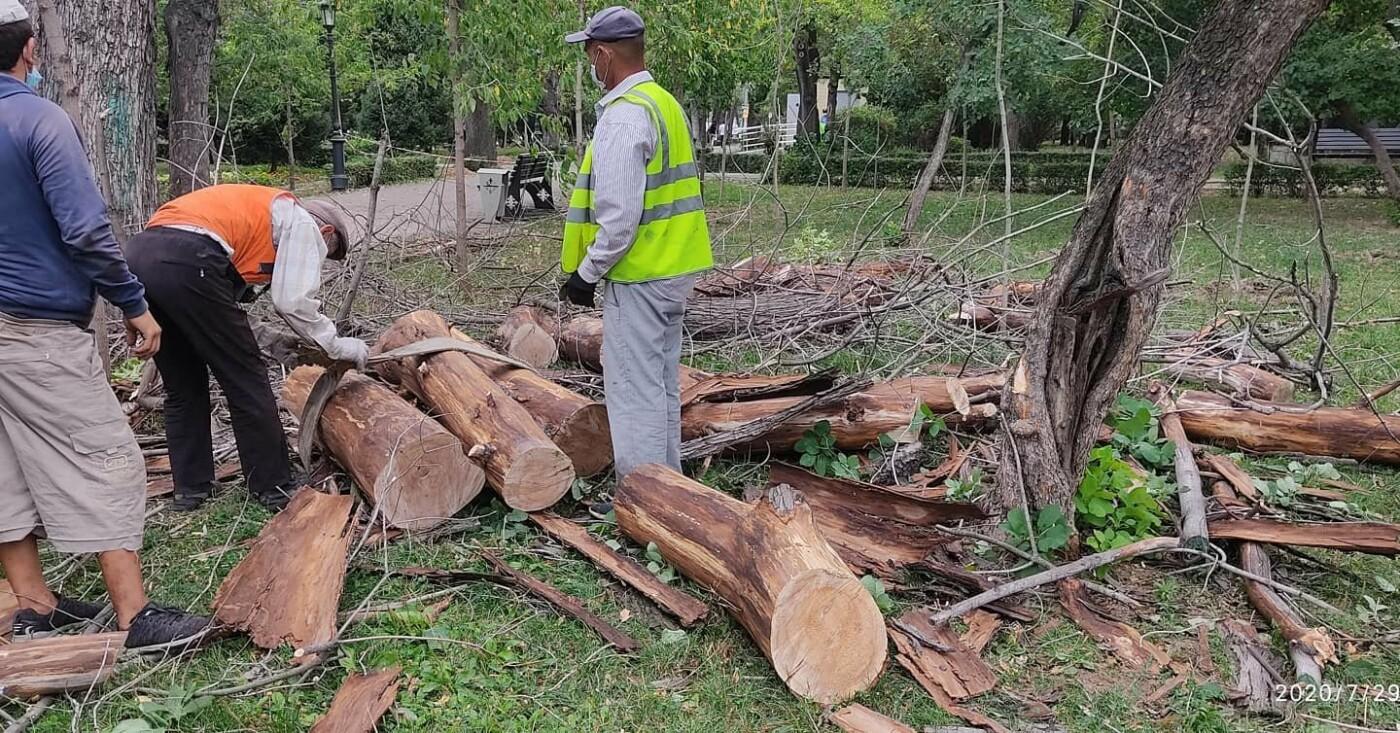 Взамен 20 вырубленных аварийных деревьев в сквере в центре Алматы высадят 100 саженцев, фото-1