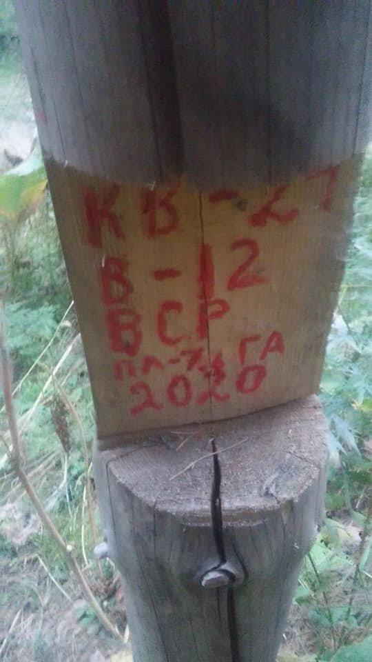 Выборочно-санитарную рубку деревьев начали в ущелье Аккайын, фото-1