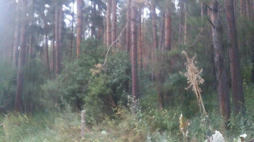Выборочно-санитарную рубку деревьев начали в ущелье Аккайын, фото-2