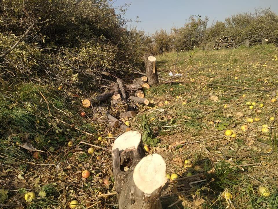 102 плодовых дерева вырубили на Каменском плато в Алматы, фото-1
