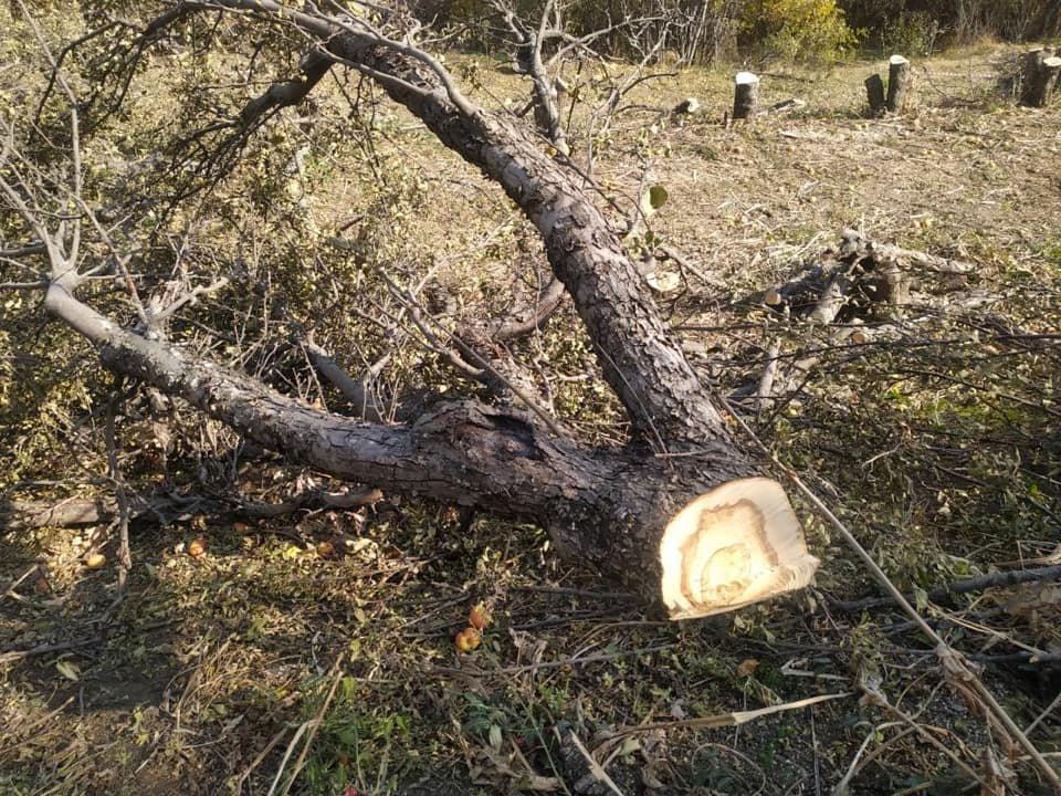 102 плодовых дерева вырубили на Каменском плато в Алматы, фото-2