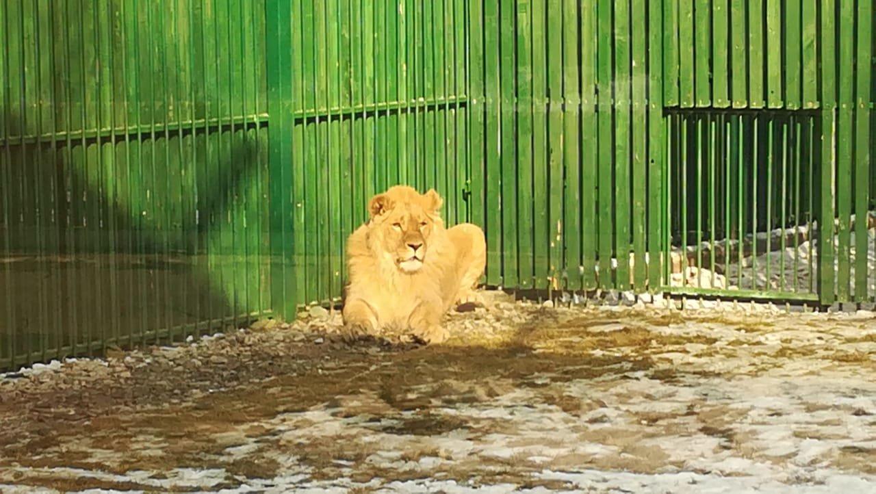 Фото администрации Алматинского зоопарка