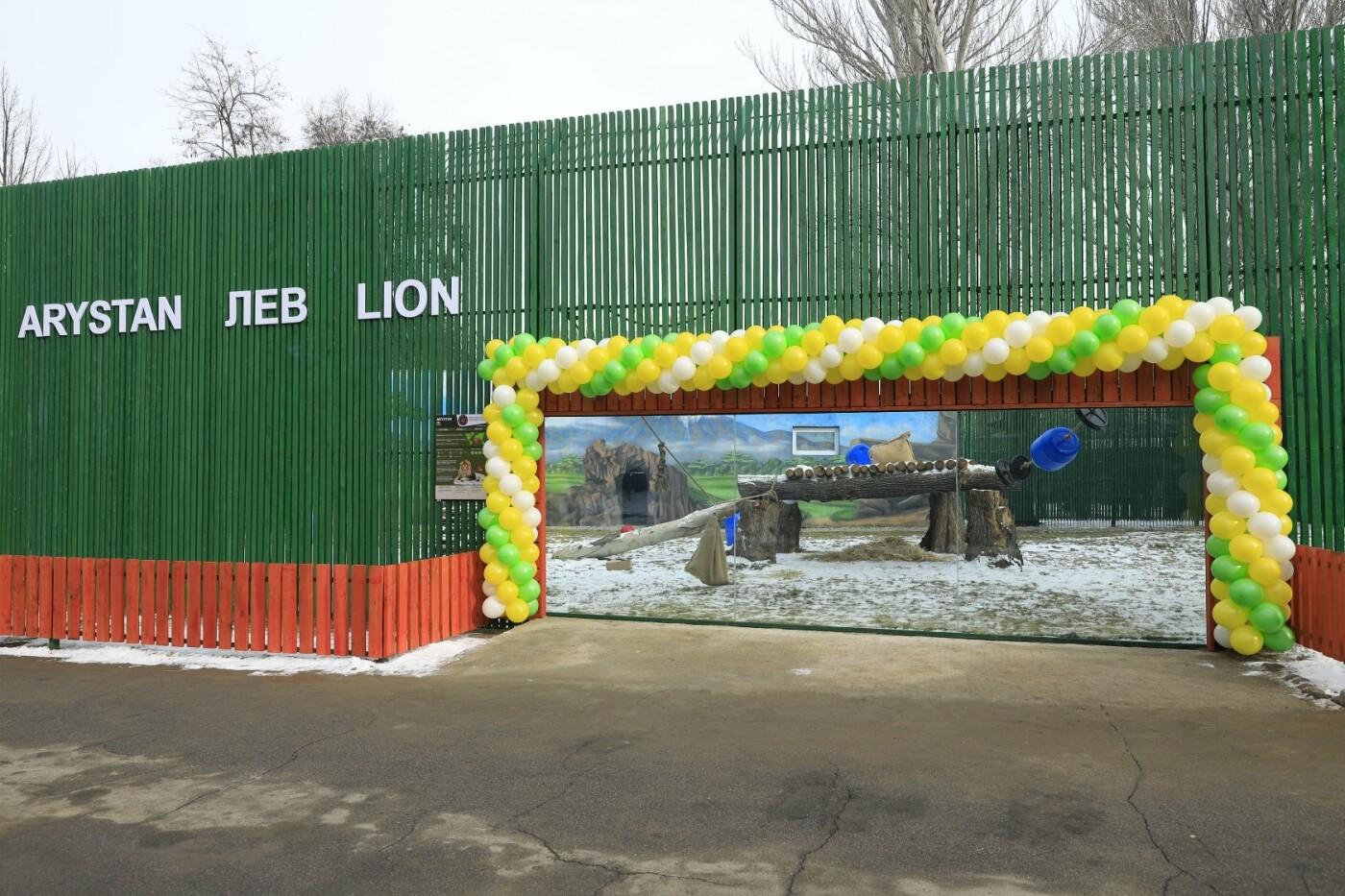 В Алматинском зоопарке открыли новый вольер для актауского льва Симбы, фото-1
