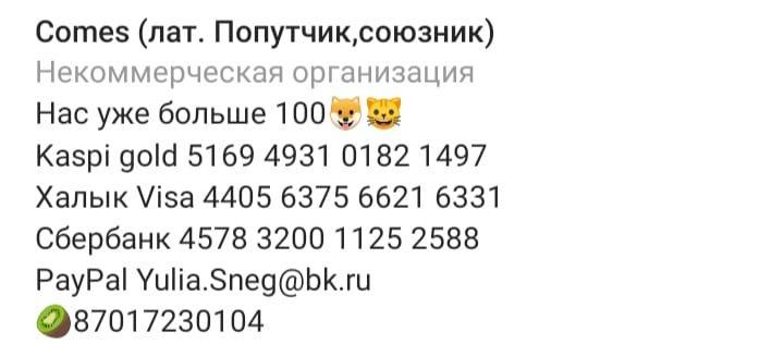 Алматинский приют для собак Comes просит поддержки для переезда на новую локацию, фото-1
