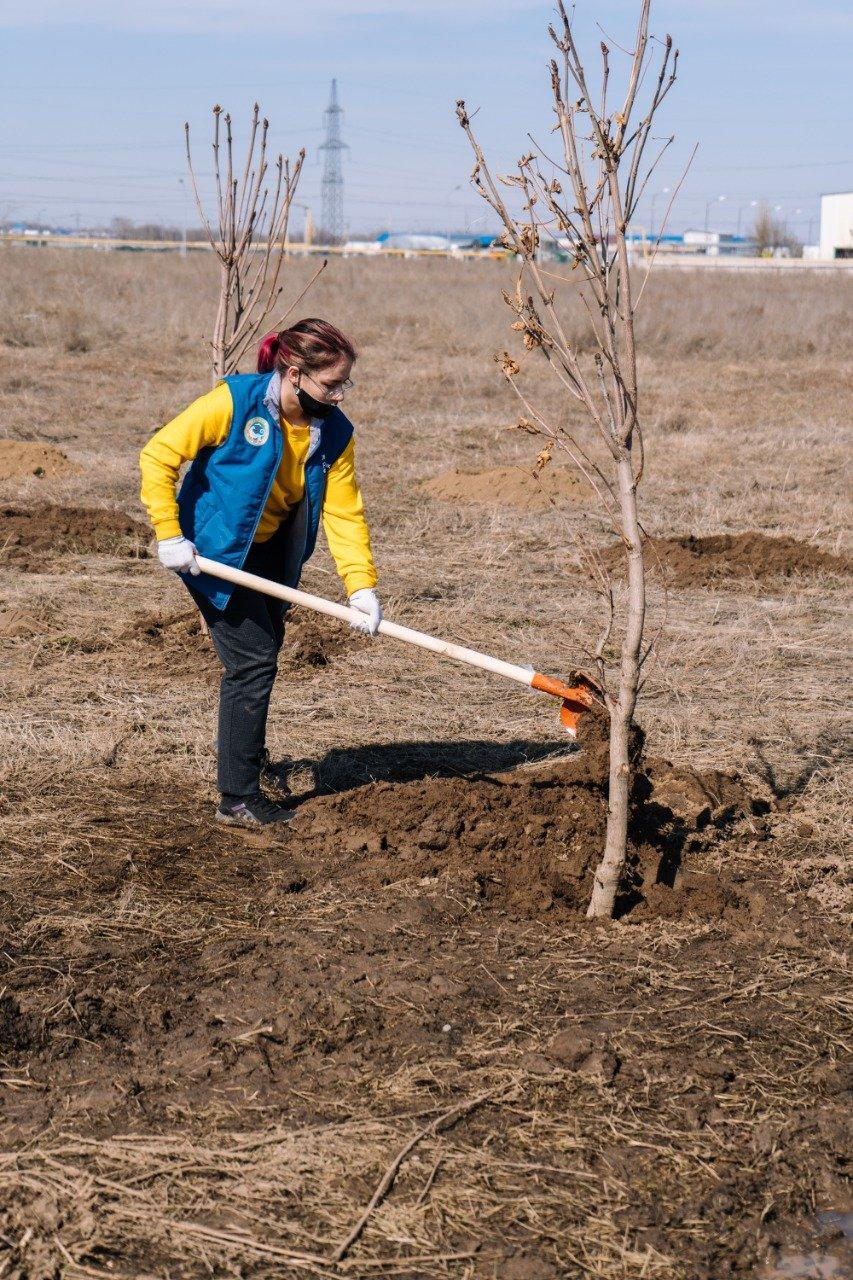 200 саженцев высадили на Аллее женщин в Алматы, Пресс-служба Управления зеленой экономики Алматы