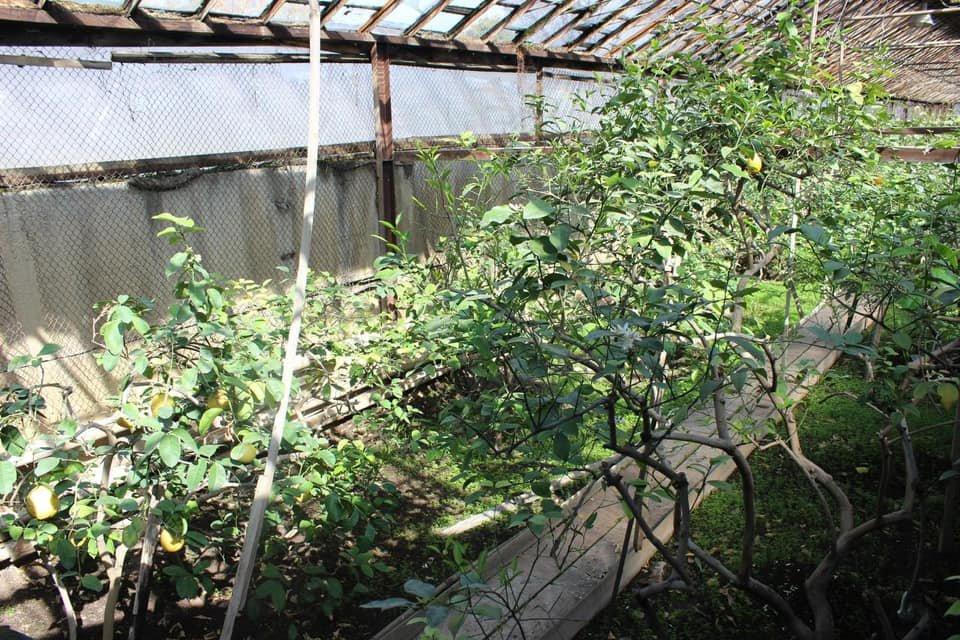 Аким определил места для озеленения в Ауэзовском районе, акимат Ауэзовского района
