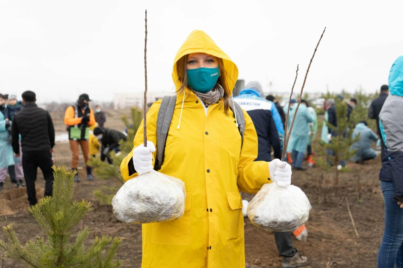 Экоактивисты провели очередной этап посадок деревьев в сосновом бору Алматы, Фото организаторов