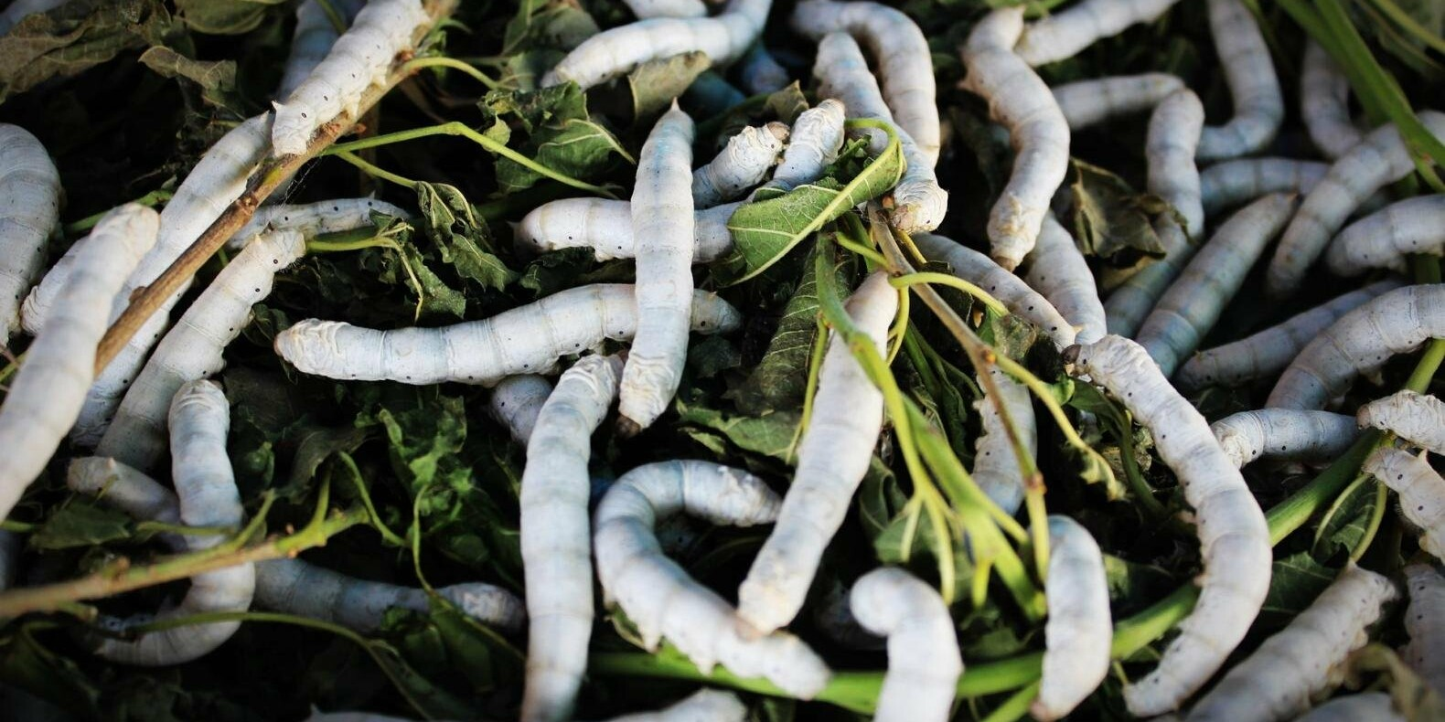 Скопление личинок после обработки деревьев в Алматы объяснили в акимате