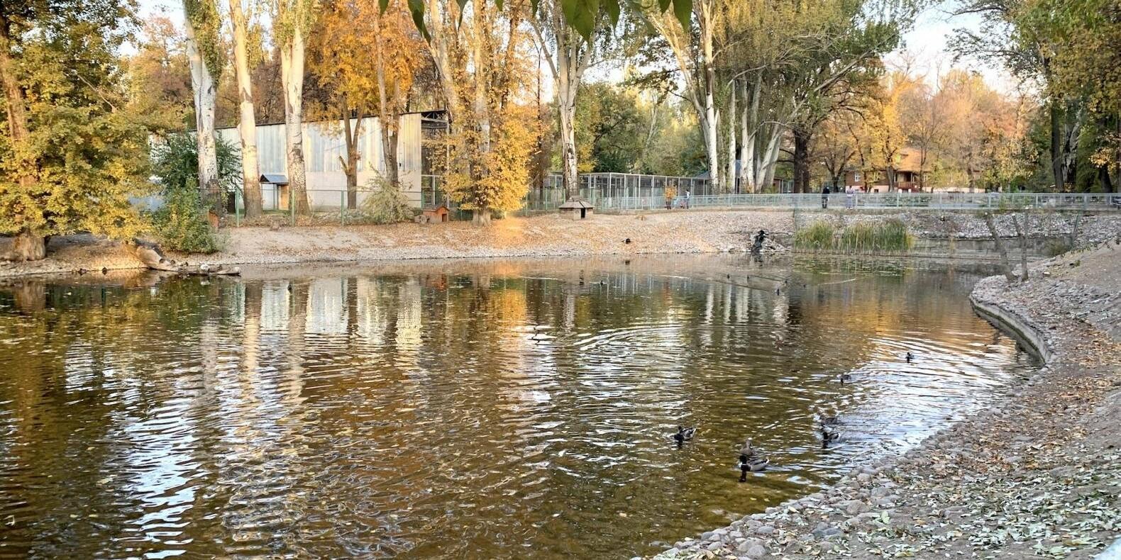 Пруды для птиц отремонтируют и благоустроят в зоопарке Алматы