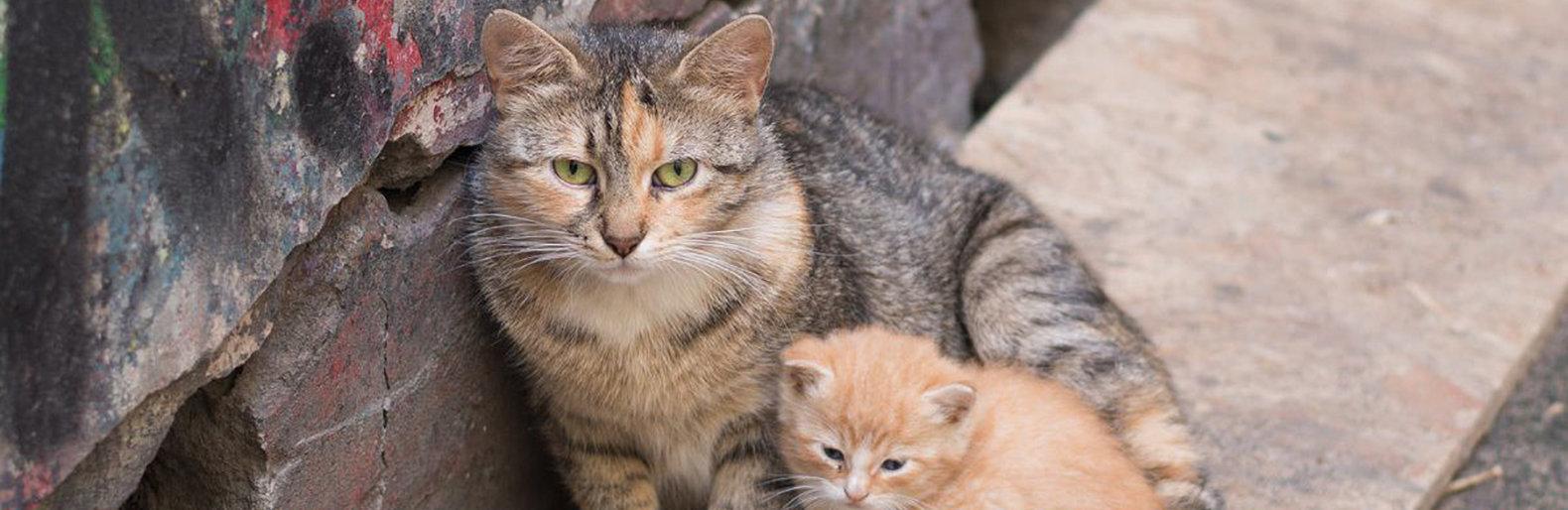 Отлавливать бездомных кошек в Алматинском зоопарке будут с согласования зоозащитников